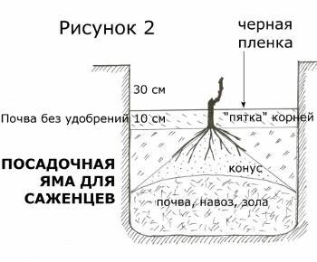 Посадочная яма для саженцев